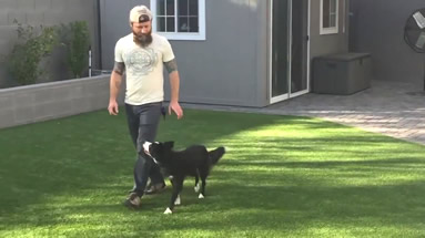 Phoenix Dog Training, Bootcamp