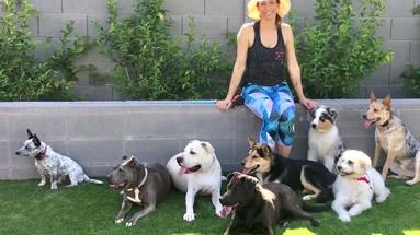 Dog Daycare, Phoenix, AZ