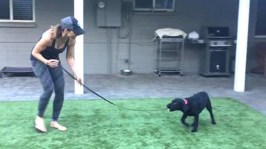 Puppy Training, Phoenix, AZ