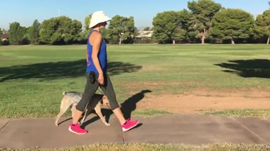 Dog Walk Training, Phoenix, AZ