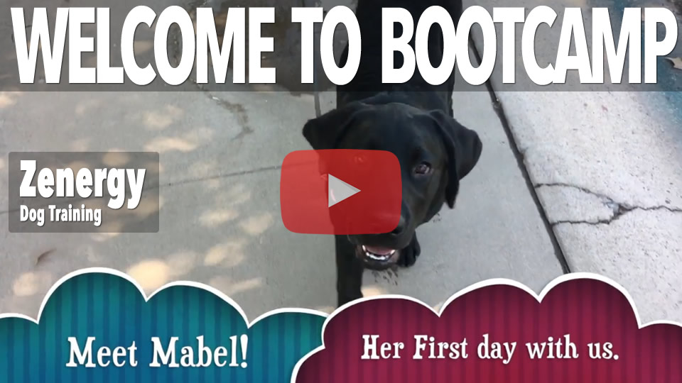 Bootcamp Video - Mabel's Transformation