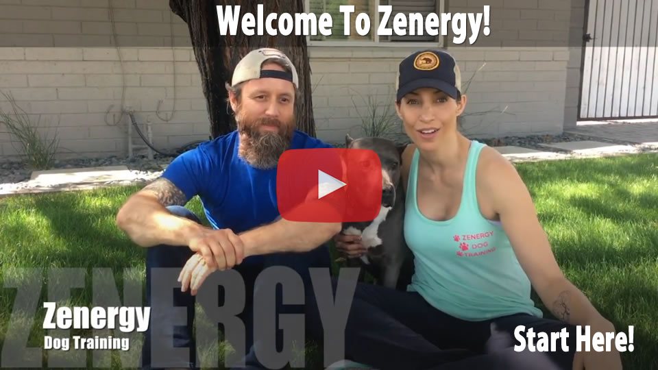 Welcome to Zenergy Dog Training - Video
