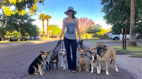Phoenix Dog Training | Dog Obedience | Aggression | Zenergy