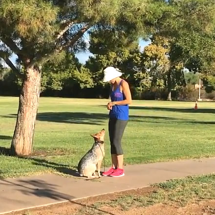 Dog Training Classes, Phoenix AZ