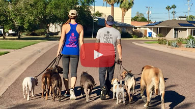 Phoenix Dog Trainer, Behavior Transformation Videos