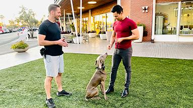 Private Dog Training Lessons, Phoenix, AZ